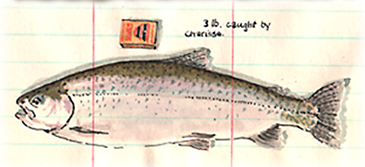 New Zealand Rainbow trout watercolour